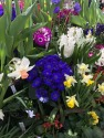 2019 Outing  - Smith College Spring Bulb Show